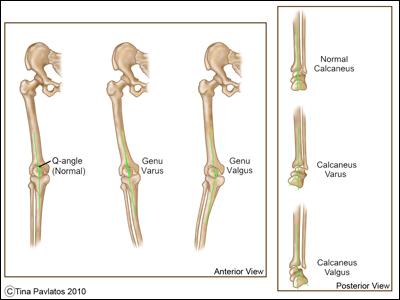 medical illustrations � athletex