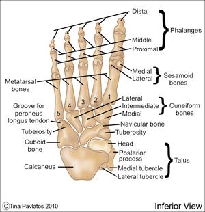 inferiorfoot